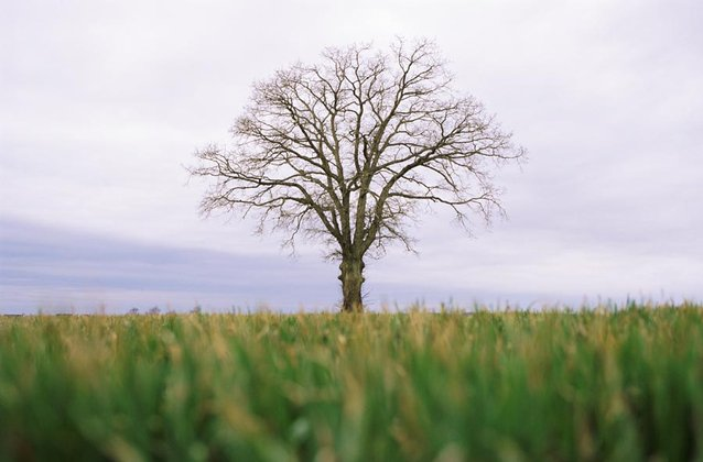 Image of a tree
